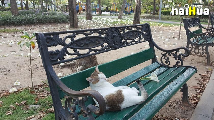 สวนสาธารณะพระราม8