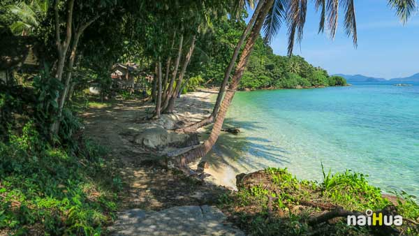 เกาะหวายพาราไดซ์
